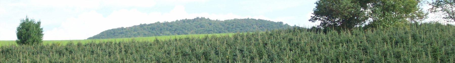 mountain advantage christmas trees